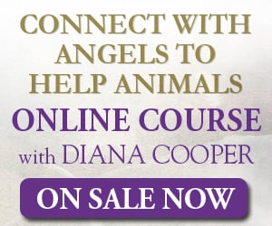 Angels, Connect with Angels, Help Animals, Pets, Love Pets, Online Course
